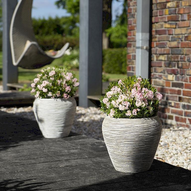 bl tenstark und kugelrund bloombux harries plantdesign. Black Bedroom Furniture Sets. Home Design Ideas