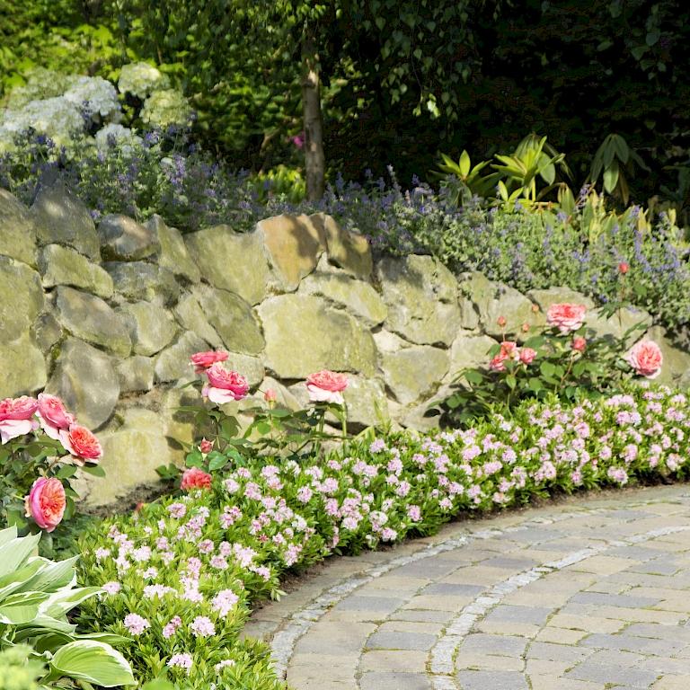 hart im nehmen bloombux auch f r raue standorte geeignet harries plantdesign. Black Bedroom Furniture Sets. Home Design Ideas